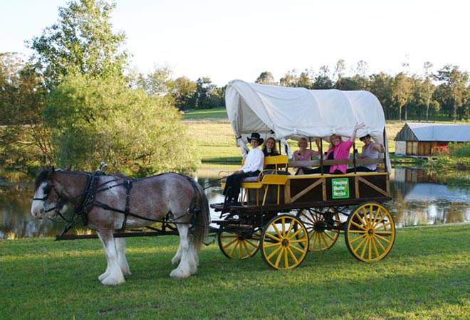 Hunter Valley Events Tours Activities Horse and Carraige Tour