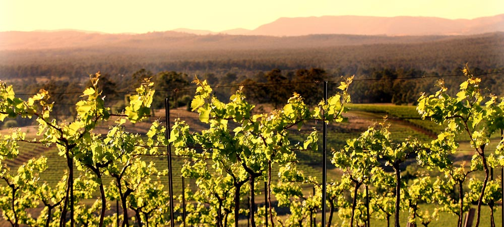 Hunter Valley Events Tours and Activities Header